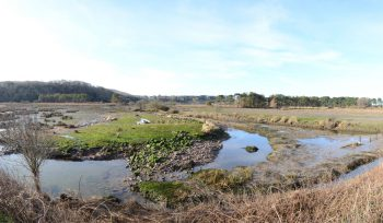JBA Cwm Ivy Marsh habitat creation project of the week