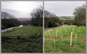 Tree Planting: before and after