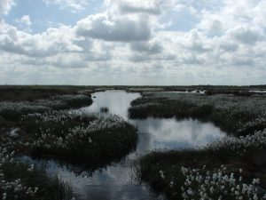 Thorne Moors Water Level Management Plan project