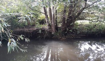 Grange Paddocks weir removal feasibility, River Stort